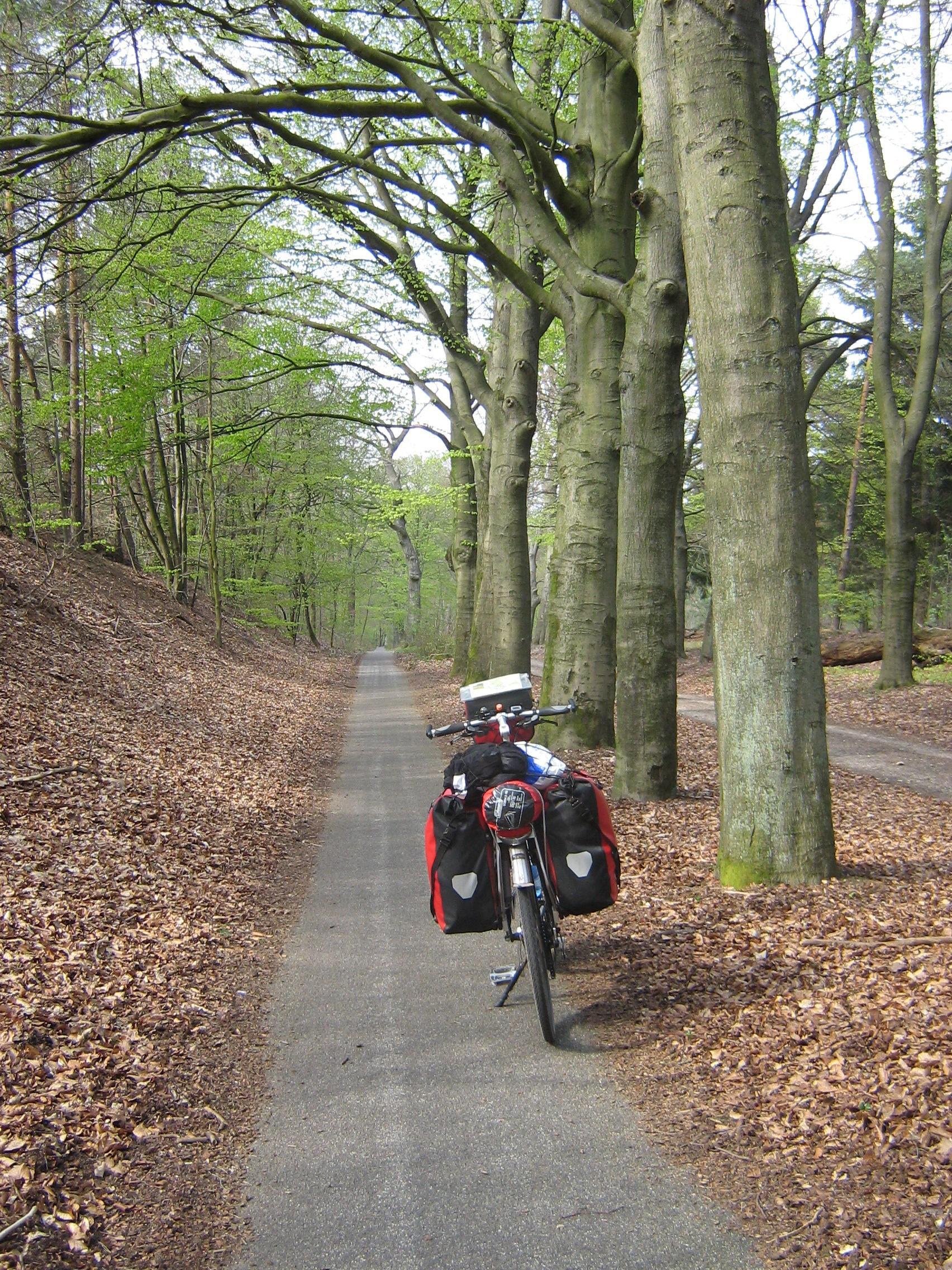 oude beukenbossen bij Nijmegen - Groesbeek